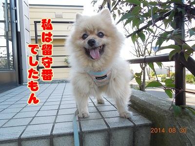 2014083112.jpg
