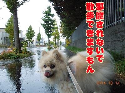 2014101401.jpg