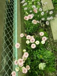 20140421flowers.jpg