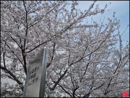 H26年 桜2落款付