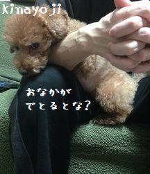 よじよじぽんぽん4