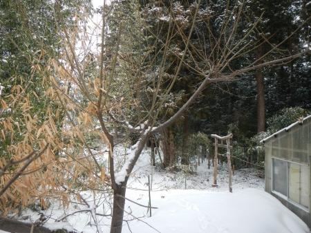 栗の挿し木 (1)