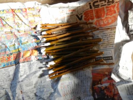 栗の挿し木 (5)