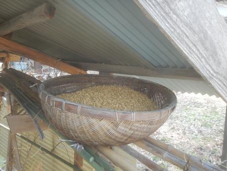 種籾 (3)