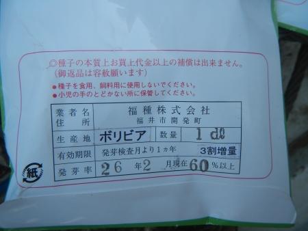 キヌアの種蒔き (7)