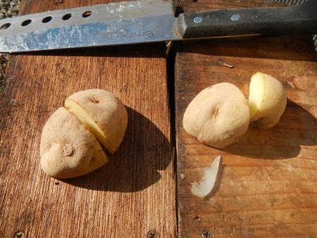 種芋の植え付け (3)