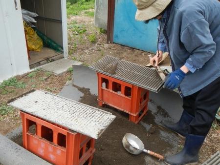 稲の種蒔きやり直し (3)