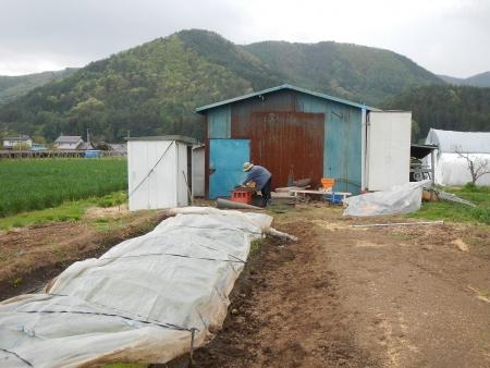稲の種蒔きやり直し (2)