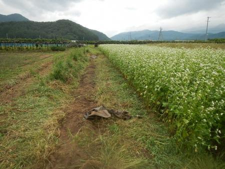 中学生と農作業 (3)
