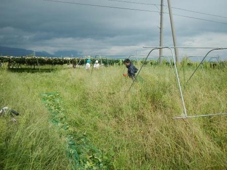 中学生と農作業 (1)