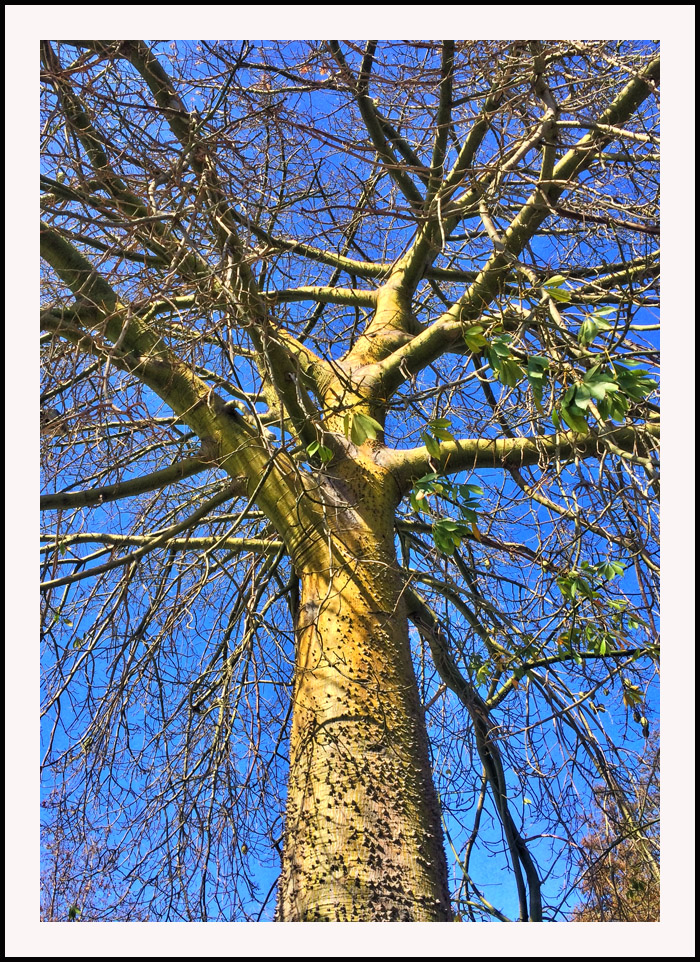 tree22714.jpg