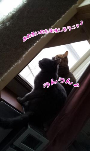 20140910_0553241.jpg