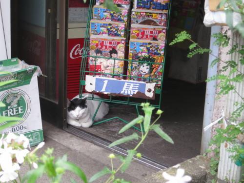 駄菓子屋猫