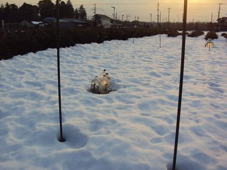 今の積雪は:ペットボトルをみるとわかる