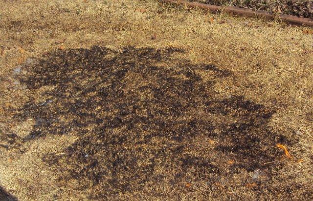 野焼き中の芝生