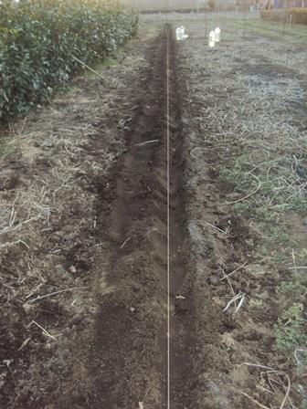 ジャガイモの植えつけ完了