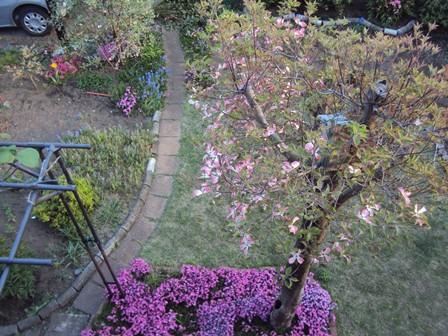 二階から見たハナミズキと庭に花達