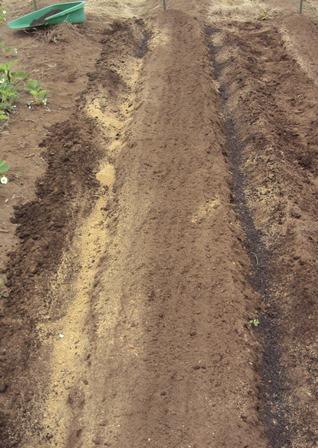 畝の両サイドにぼかし肥と草木灰