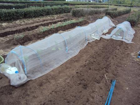定植が終わったキューリなすトマトピーマン