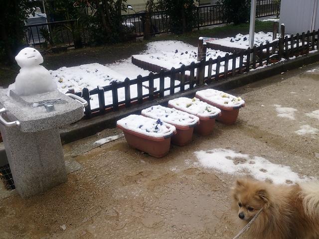 2014.2.14 神戸も大雪でした&3月以降の神戸下町ツアーなどのイベント告知(^^♪