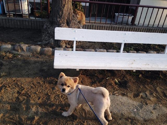 2014.3.20以降のマールの散歩と散髪をアップしてみました(^o^)