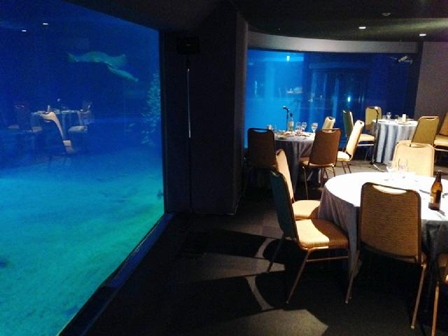 2014.3.25 海遊館でジンベエザメの遊ちゃんと呑みました(^^)v