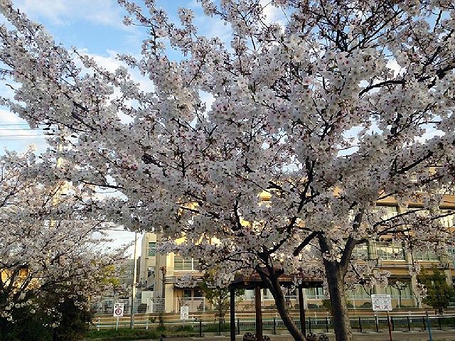 2014.4 携帯の写真と4月9日の中学入学式(*^_^*)