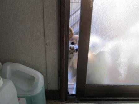 ドアをガリガリ