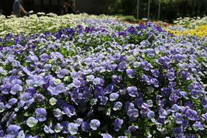 京都府立植物園へ再訪