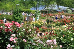 花フェスタ記念公園春