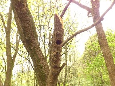 201404満濃池森林公園巣穴