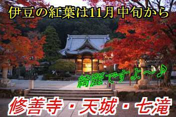 kouyo_20140829004100eed.jpg