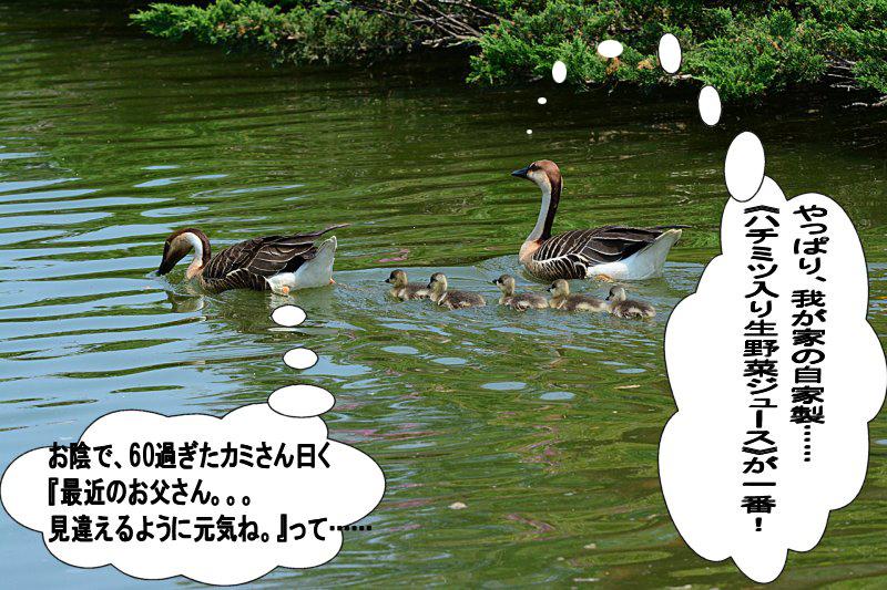 DSC_6221.jpg
