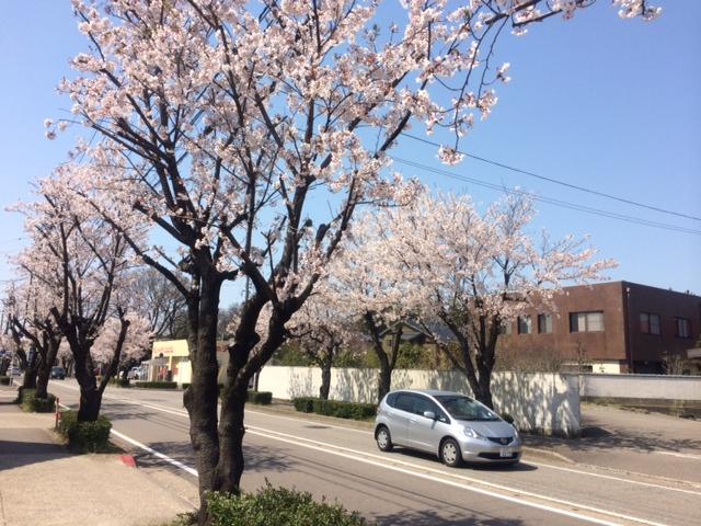 2014sakura02.jpg