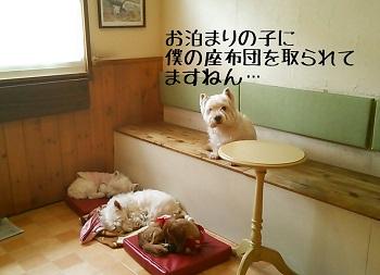 2014-03-02-22-16-02_deco-1.jpg