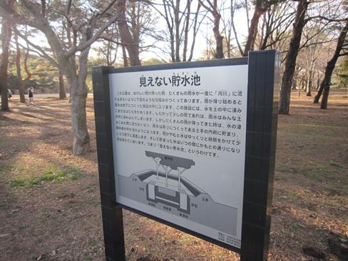 140315 野川公園01