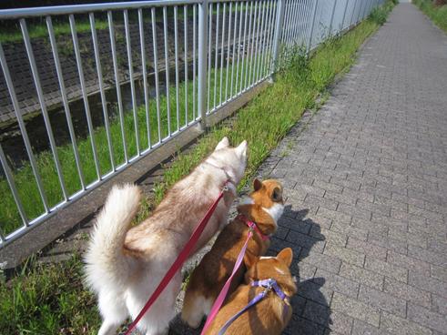 140508 散歩01