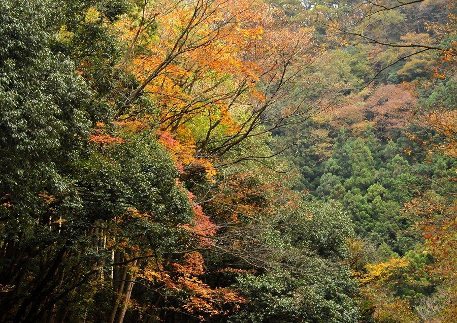 2014-11-19-aki-09.jpg