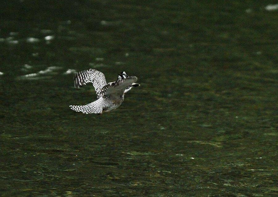 2014-09-26 水面滑空04