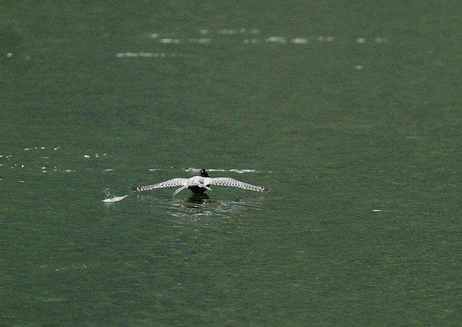 2014-09-26 水面滑空07