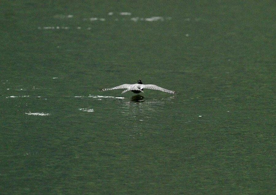2014-09-26 水面滑空08
