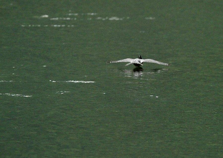 2014-09-26 水面滑空09