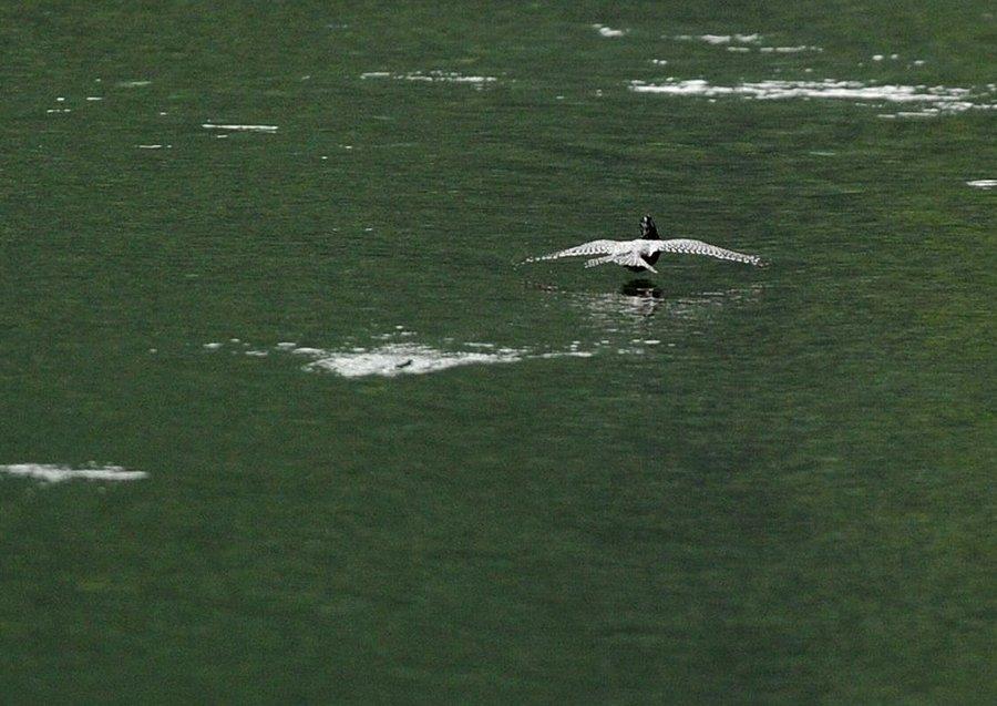 2014-09-26 水面滑空10