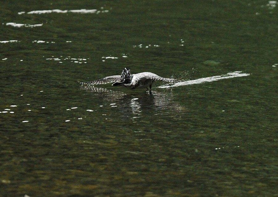 2014-09-26 水面滑空11