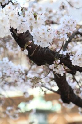 1020_2014-03-28-15-26-52.jpg