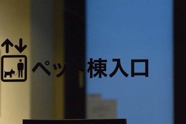 s-DSC_1674.jpg