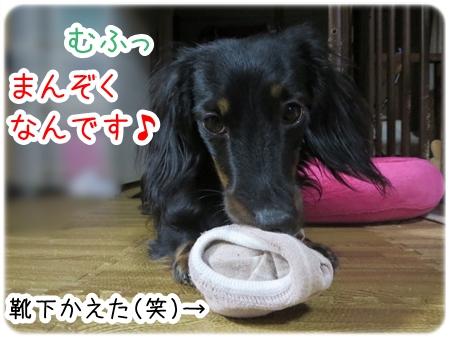 IMG_0310_6.jpg