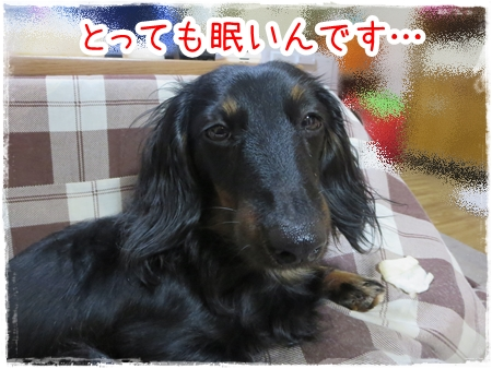 IMG_0325_2.jpg