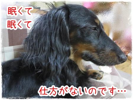 IMG_0325_3.jpg