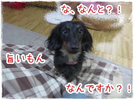 IMG_0325_7.jpg